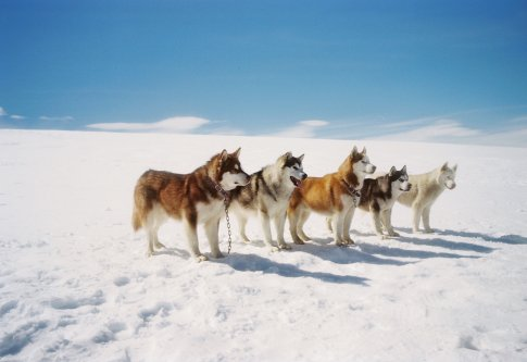 Eight below (2006) - front back