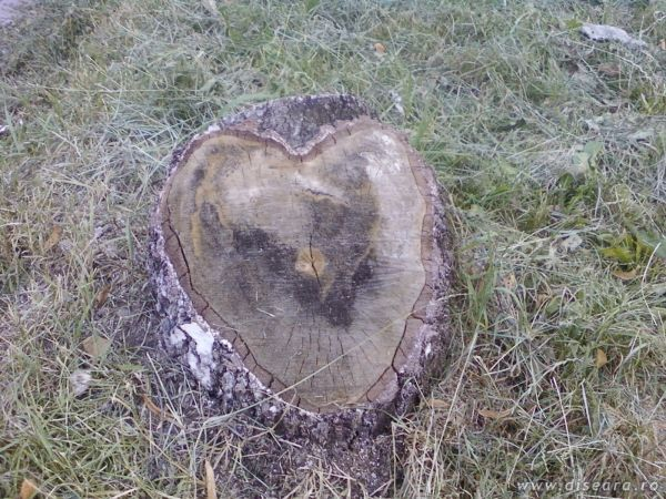 love is in the air... and trees